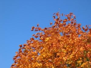 autumn, fall, leaves, trees, nature